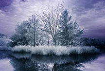 Photography - Infrared / by Diane Aldrich