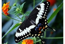 Photography - Butterflies and Other Winged Friends / by Diane Aldrich