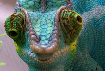 Photography - Reptiles and Amphibians / by Diane Aldrich