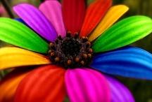 Rainbows / by Team Rainbow Designs