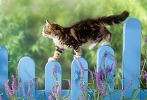 My Favorite Cat Pins / Favorites that have been re-pinned from all 13 cat boards. / by Judith Hindall