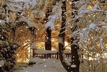 Winter wonderland / by Katzah -