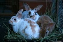 Bunnies and Rabbits / a Love / by Lisa Graziano Reinshagen