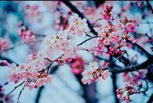 Photography  / by ༺ᴊᴎɤᴄ⁞ᴘıᴎ༻