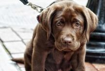 Animals / I love animals. I have a fondness for Clydesdale & Belgium draft horses, Border Collies, Australian Shepherds, Chocolate Labs, Boxers, Golden Retrievers,  Elephants, Donkeys and any animal that needs rescued and loved.  / by Caroline McKean