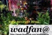 wadfan@ / http://www.facebook.com/wadfanbean