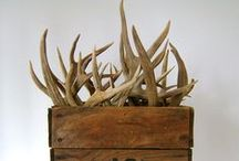 Antlers / by Legendary Whitetails