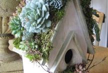 Bird houses, feeders, baths, etc. / by Lynetta Kruse- Murdoch