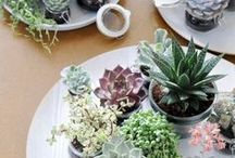 OUTDOORS + PLANT LIFE / by PRETTY HAUTE MESS
