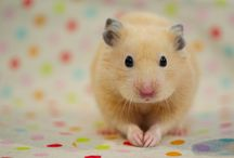 HAMSTER heaven / All thats cute and hamster shaped xx / by Jules Whittemore