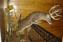 Awesome Deer Mounts / A collection of the coolest deer mounts ever created by taxidermists. / by Legendary Whitetails