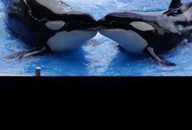 Dolphin's Orca's Seals / Dolfijnen, orka's en zeehondjes