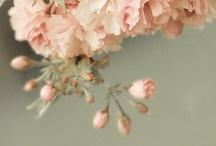 Flower Power / by Rachel Brown
