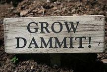 "Garden. / ""When I pass a flowering zucchini plant in a garden.. my heart skips a beat"" -Gwyneth Paltrow"