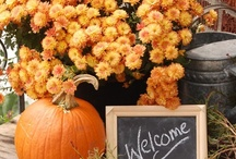 Fall / Fall is my favorite time of the year! / by Angela Ferando