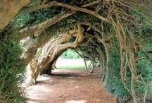 Dreaming Tree / Outdoor Spaces I would love to have one day! / by Linney Pig