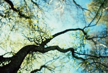 Art Ideas—Trees / by Terri Mobley