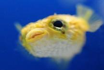 Big Eyed Fish / by Linney Pig