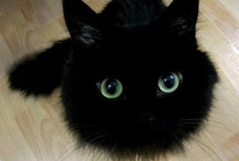 Black Cat Changing Color / by Linney Pig