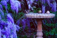 Garden—Fountains & Containers / by Terri Mobley