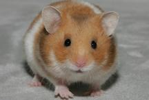 Cute Hamsters <3 / by Anita Sattler