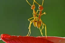 Ants Marching / by Linney Pig