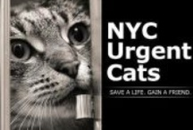 Animals In Need of Rescue / Cross posting animals in need of rescue/foster/adoption from kill shelters.