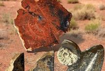 Fossils / Art By Nature: Polished Fossils and Petrified Wood Displays