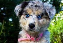 ✧Furry Friends✧ / Adorable little animals!