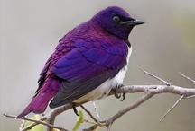 Enchanting Birds / by Shelly B...