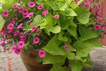 Gardening and Outdoor Ideas
