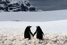 P is for Penguin / Anything and everything penguin-related, because one can never have enough penguins. :)