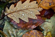 Falling Leaves / by B U