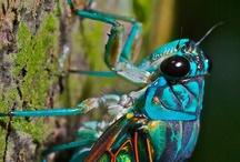 Buggy / by Cheryl Lysy