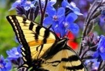 A Flitter, a Flutter / by Cheryl Lysy