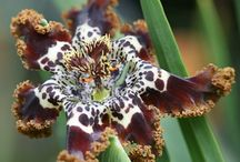 Flowers & Blossoms #2 / by Cheryl Lysy