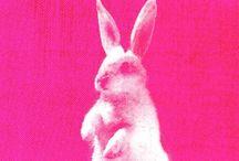 Pink pink pink//