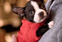 Doggy / by Cheryl Lysy