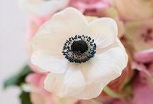 BLUMENliebe / ich liebe Blumen  Blumen, Blüten, Rose, Anemone, Mohn, Lilie, Tulpen, Blumenstrauß, Floristik, Nelke, Peonie, Pfingstrose