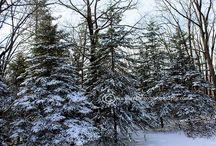 Winter Landscapes / Winter Snow Landscapes.  / by Jennifer Barger