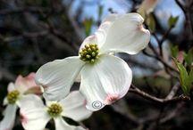 Spring Photography / by Jennifer Barger