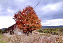 Autumn Photography / by Jennifer Barger