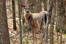 Wildlife Photography / by Jennifer Barger