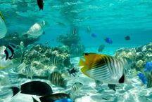 Inspirations: Underwater