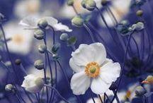 Inspirations: Flowers