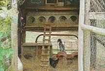 Poulettes / Pour nos poules!