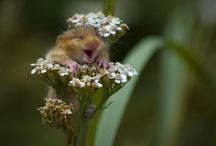 amazing flowers / by Cindy Grayson