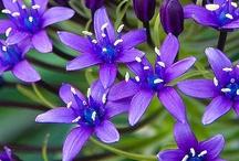 The Color Purple / by Cindy Grayson