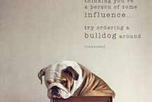 Love Me? Love my Bulldog <3 / by Stephanie Reed