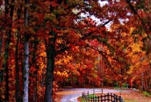 Fall aka The BEST time of the year! / by Leslie K